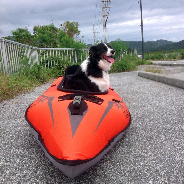 西表島ジャングルブックでは愛犬と一緒にカヌーができます