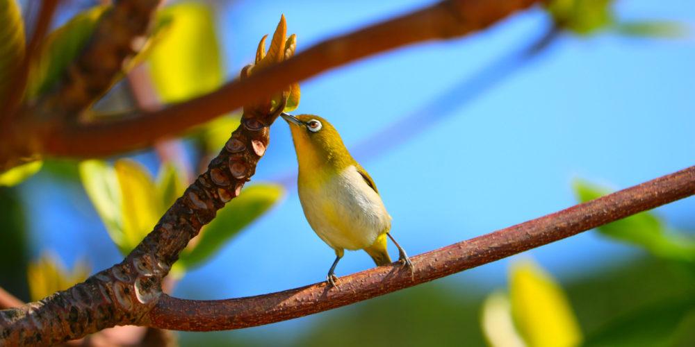 野鳥 観察 固有種 留鳥 ジャングルトレッキング