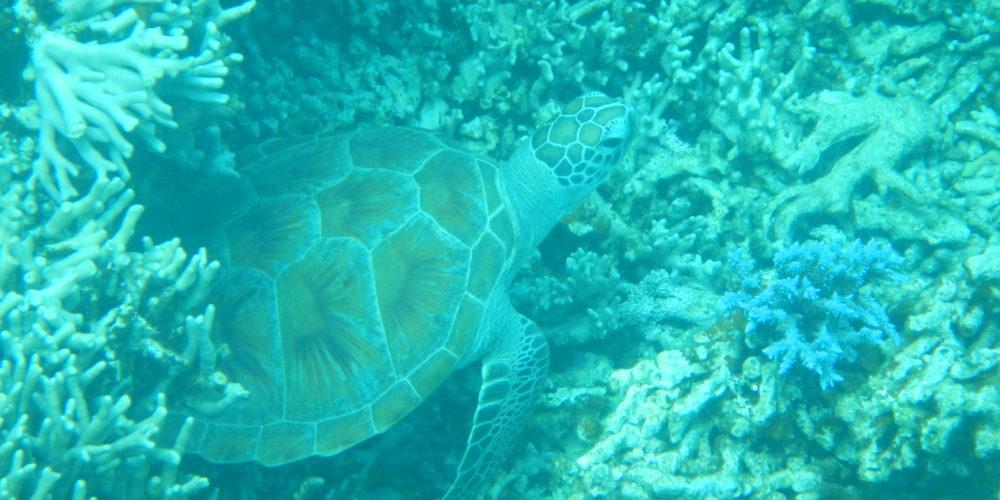 カヤック シュノーケル サンゴ トロピカル ウミガメ 熱帯魚