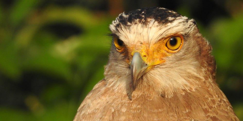 絶滅危惧種 特別天然記念物 野鳥 固有種 観察 ジャングルトレッキング