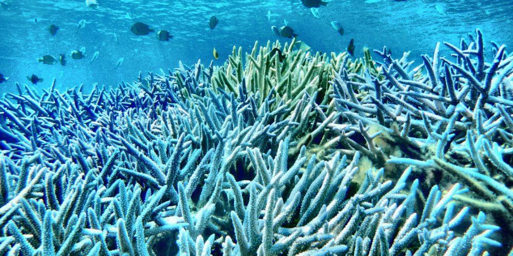 カヤック シュノーケル サンゴ トロピカル 熱帯魚