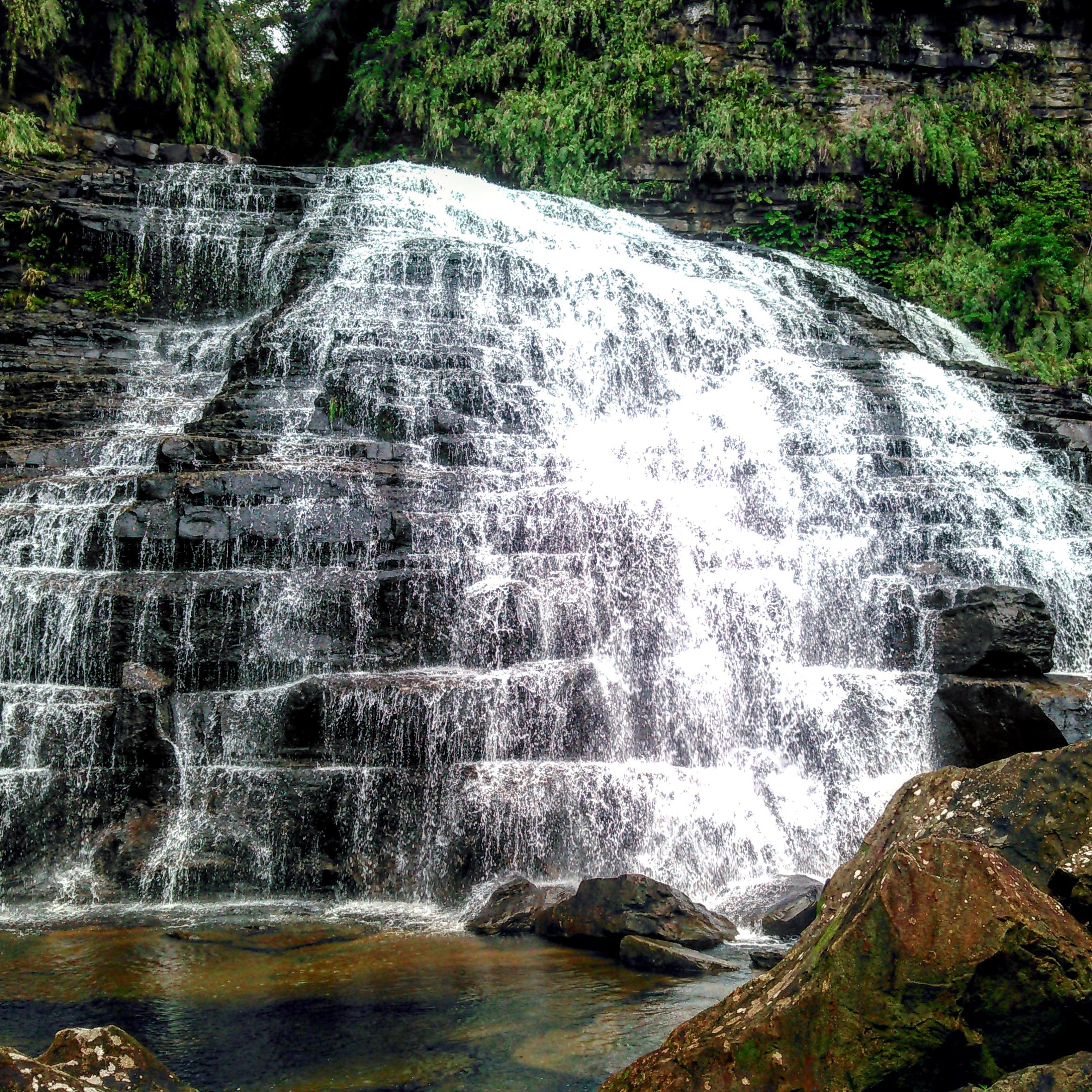 ジャングルのトカゲと幻の滝