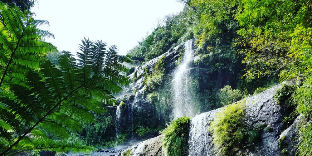 秘境 ジャングルトレッキング 滝