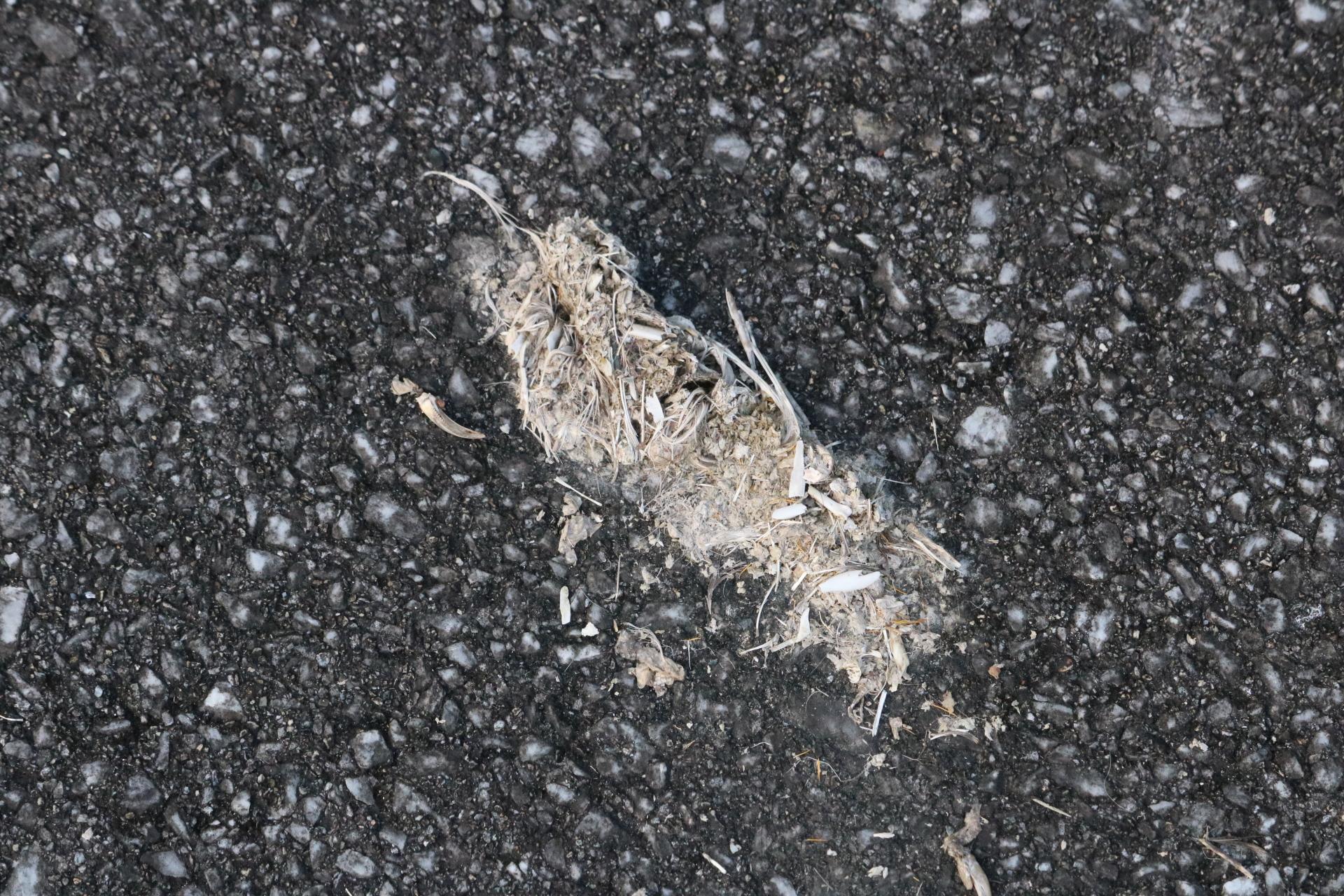 イリオモテヤマネコの糞
