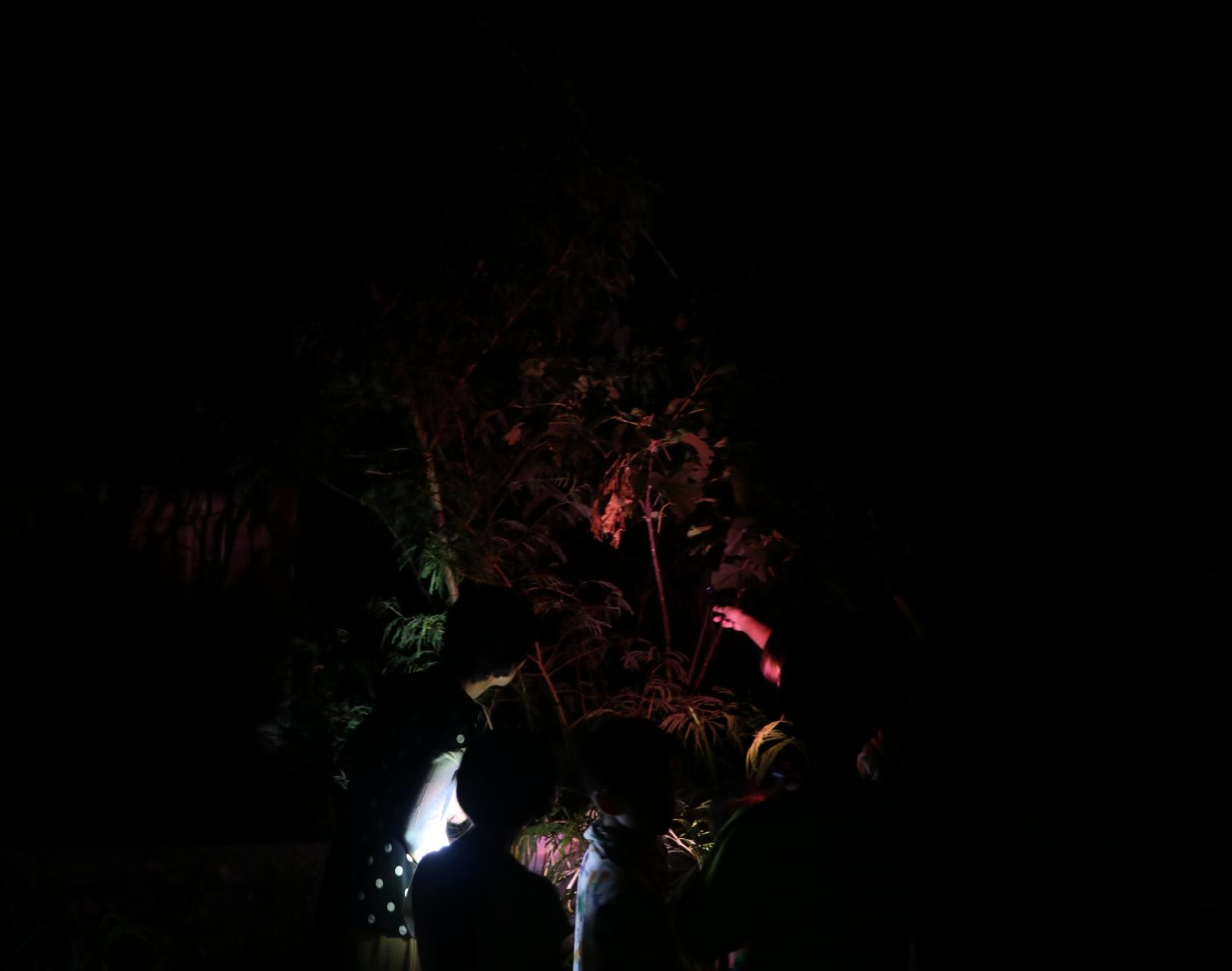 夜の西表島ジャングル
