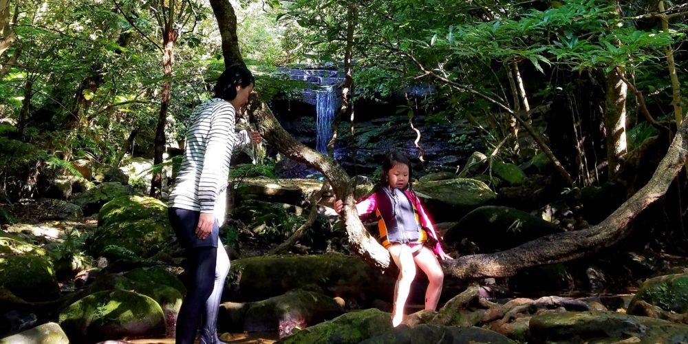 滝 モダマ ブランコ 蔓 ジャックと豆の木 絶滅危惧種 沢 川