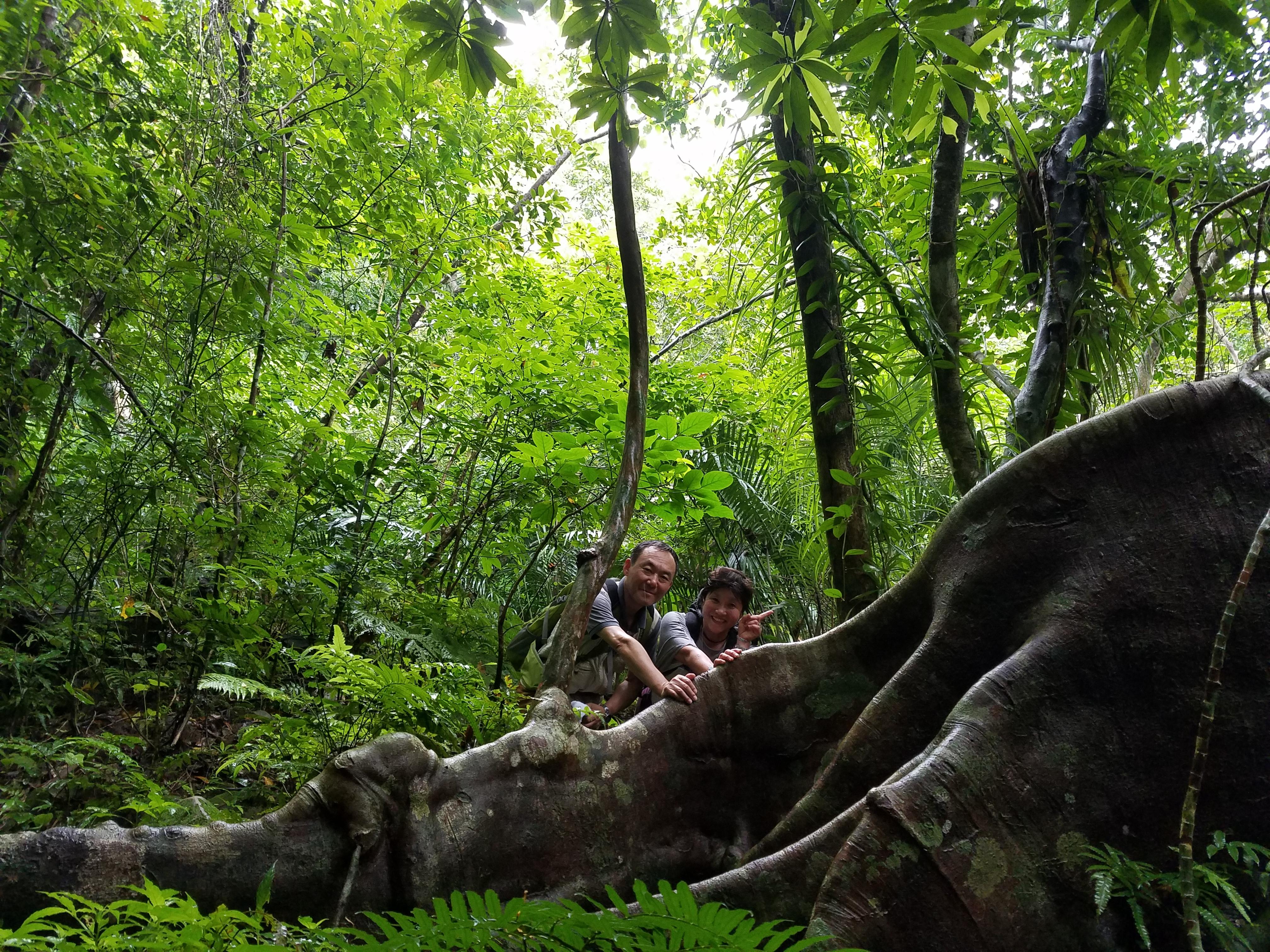 ピナイサーラの滝&マリゥドの滝&カンピレーの滝トレッキングツアー